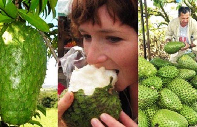 Owoc który przedstawiamy jest bardzo skuteczną metodą na nowotwory!