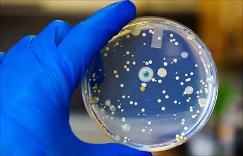 Bakterie w fontannach