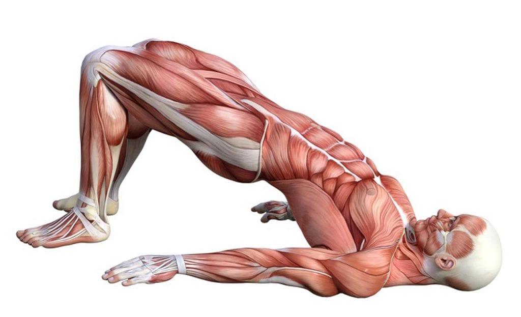 Mostek - ćwiczenia na brzuch