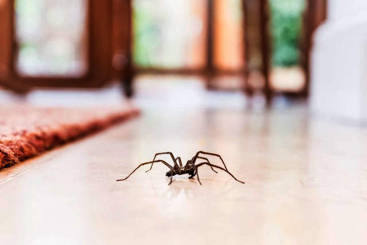 Sezon na pająki w domu rozpoczęty. To oznacza bardzo złe wieści!