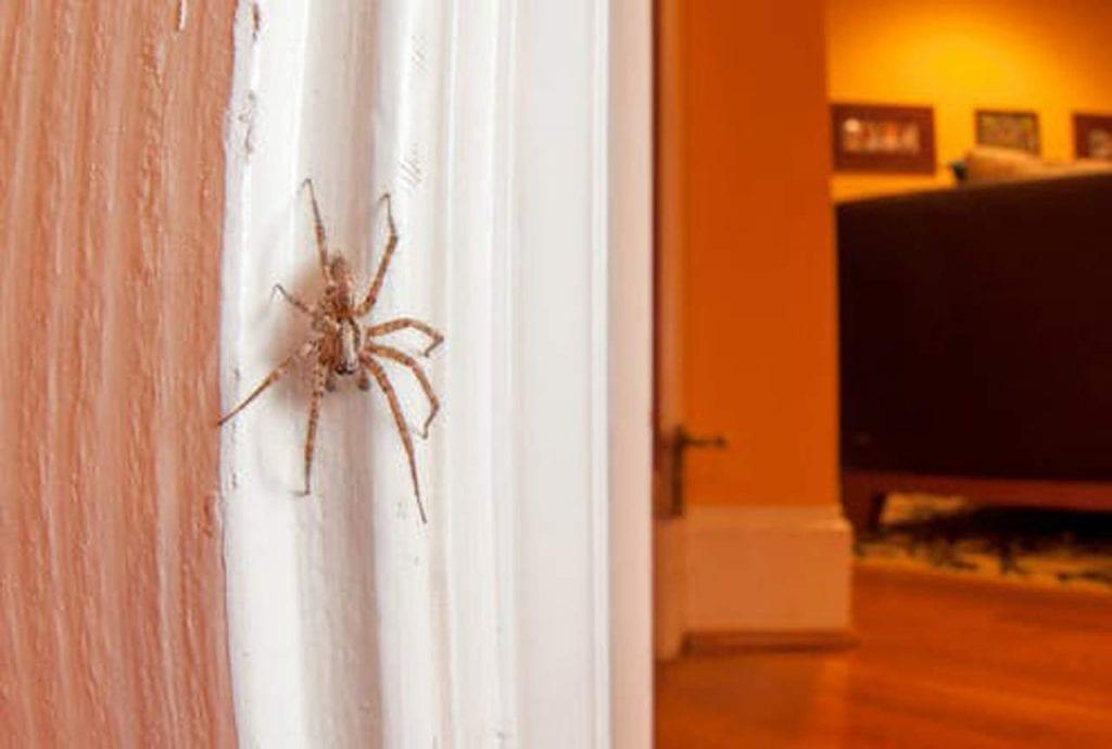 pająki w naszych domach