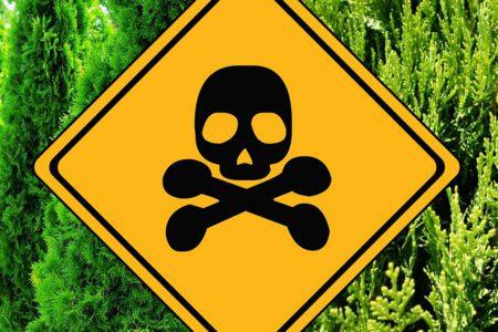 toksyczne tuje