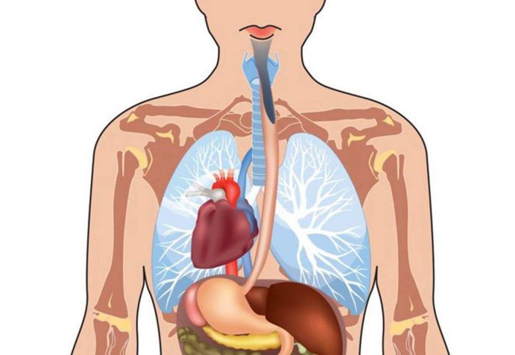 Asymetria ludzkiego ciała