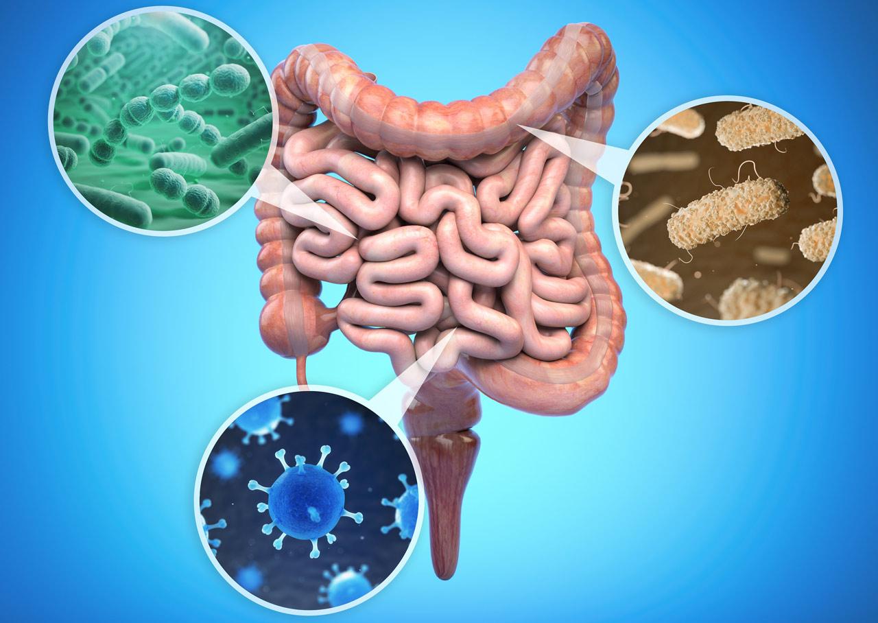 Bakterie w jelitach