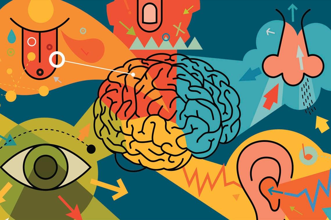 Co warto wiedzieć o zmysłach