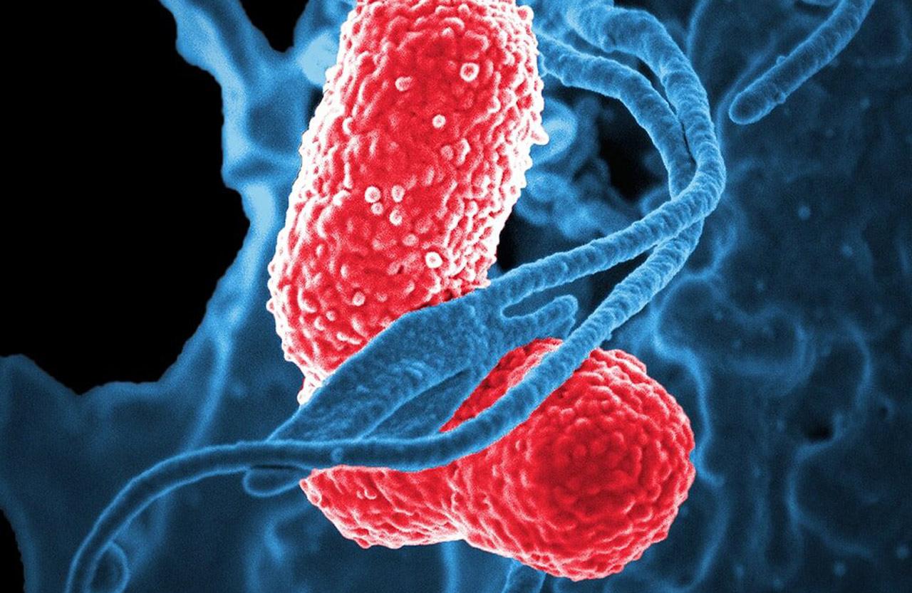 Czy mróz zabija wirusy i bakterie?
