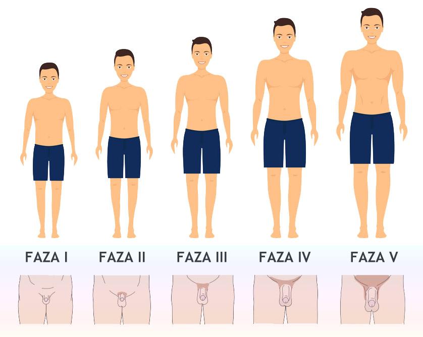 Fazy dojrzewania u chłopców