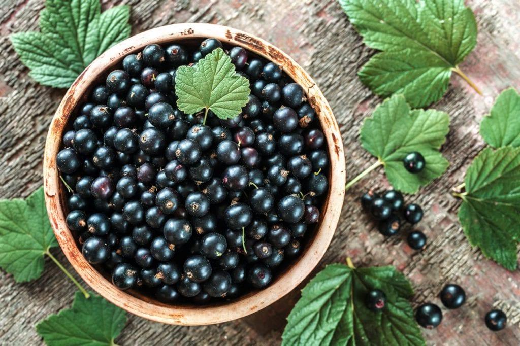 Jakie witaminy zawiera czarna porzeczka?