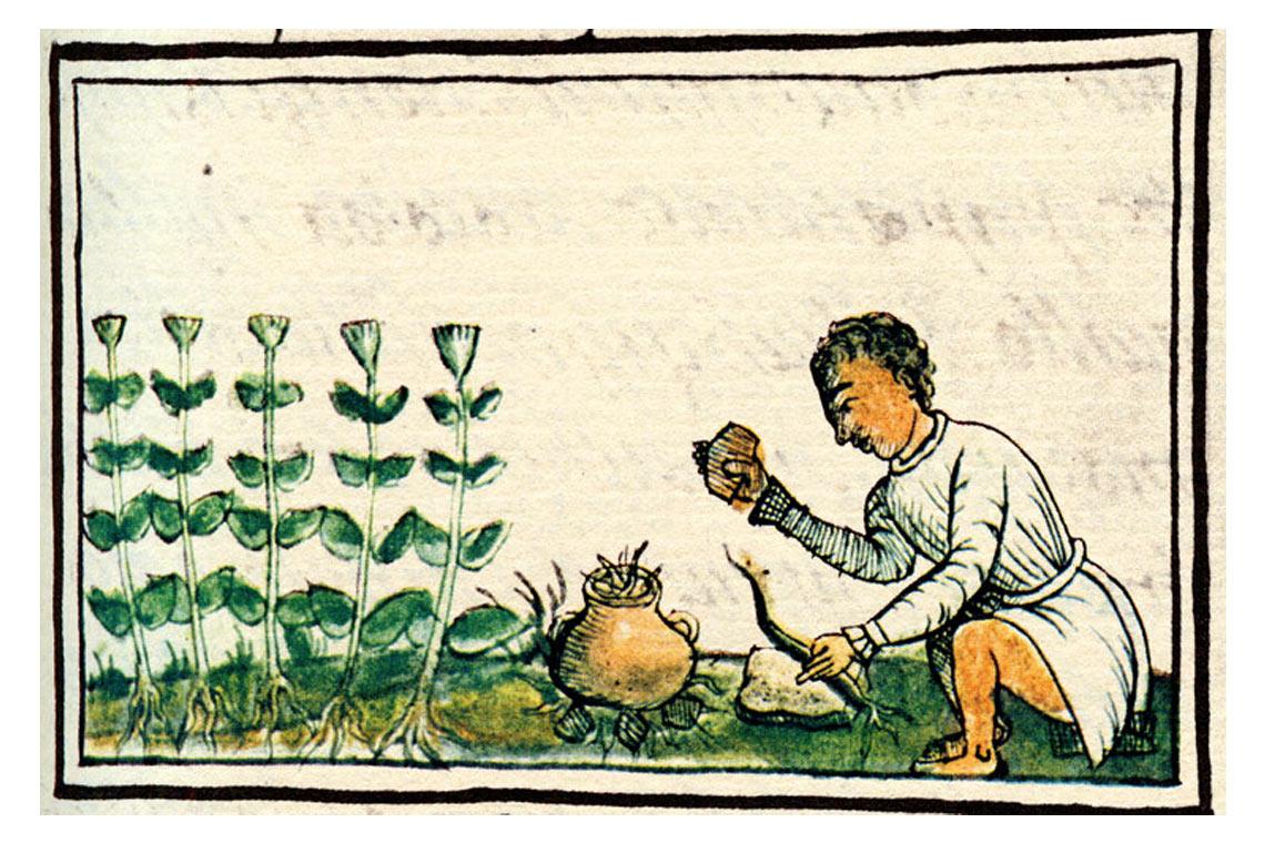 Historia ziołolecznictwa