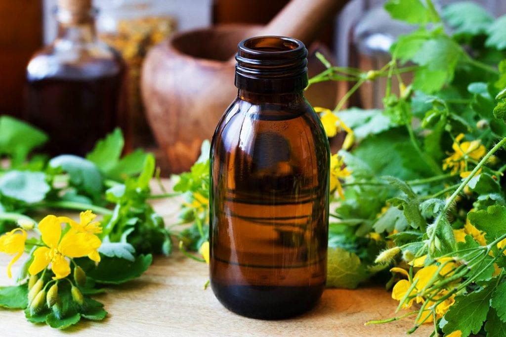 Glistnik jaskółcze ziele – działanie lecznicze