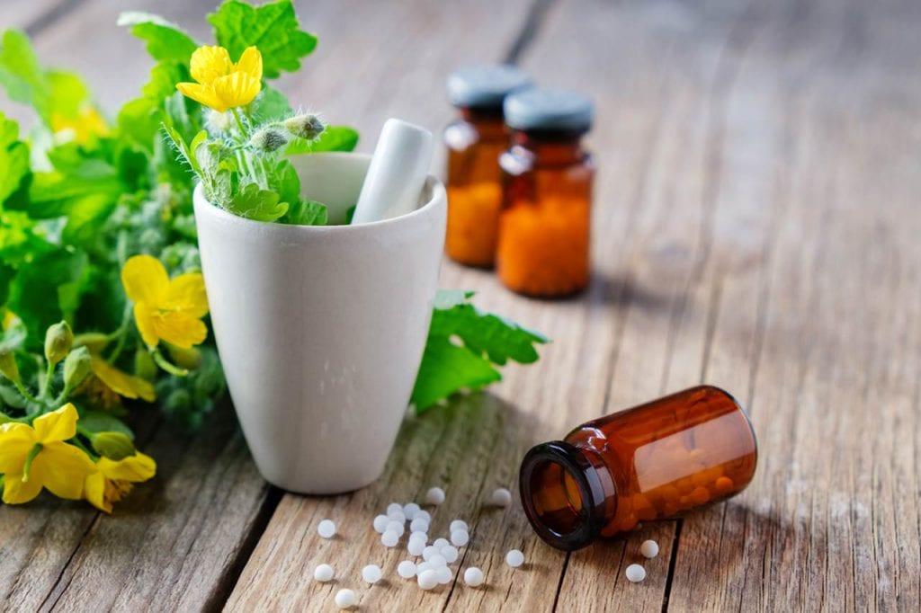 Glistnik jaskółcze ziele – zastosowanie w lecznictwie