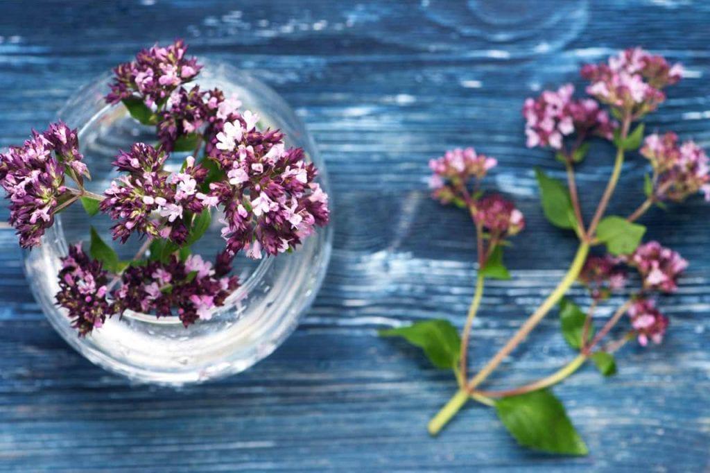 Lebiodka pospolita – działanie lecznicze