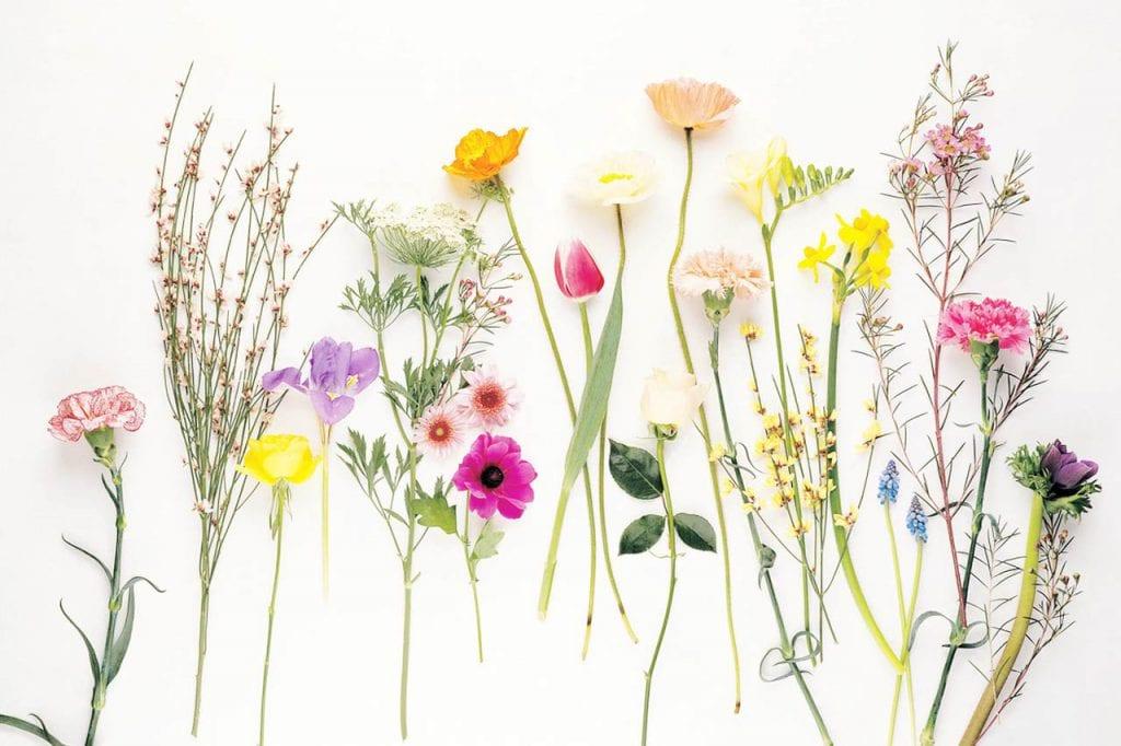 Lecznicza moc kwiatów