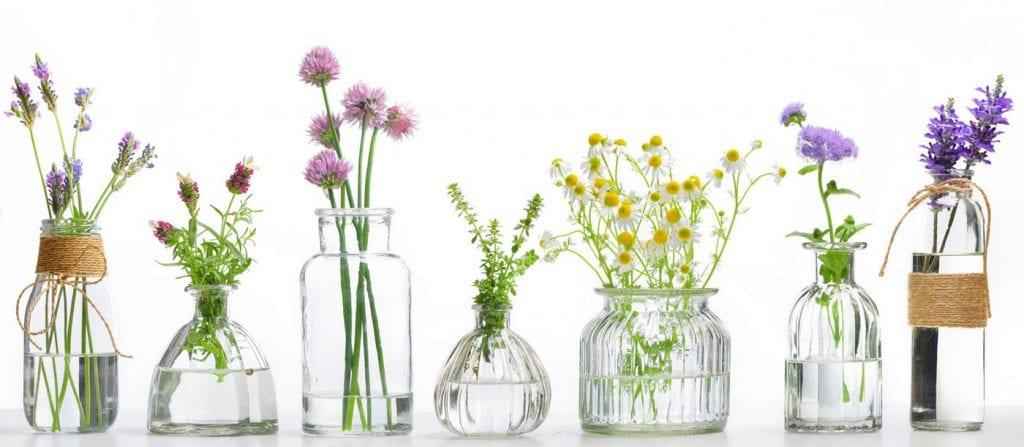 Najcenniejsze zioła lecznicze