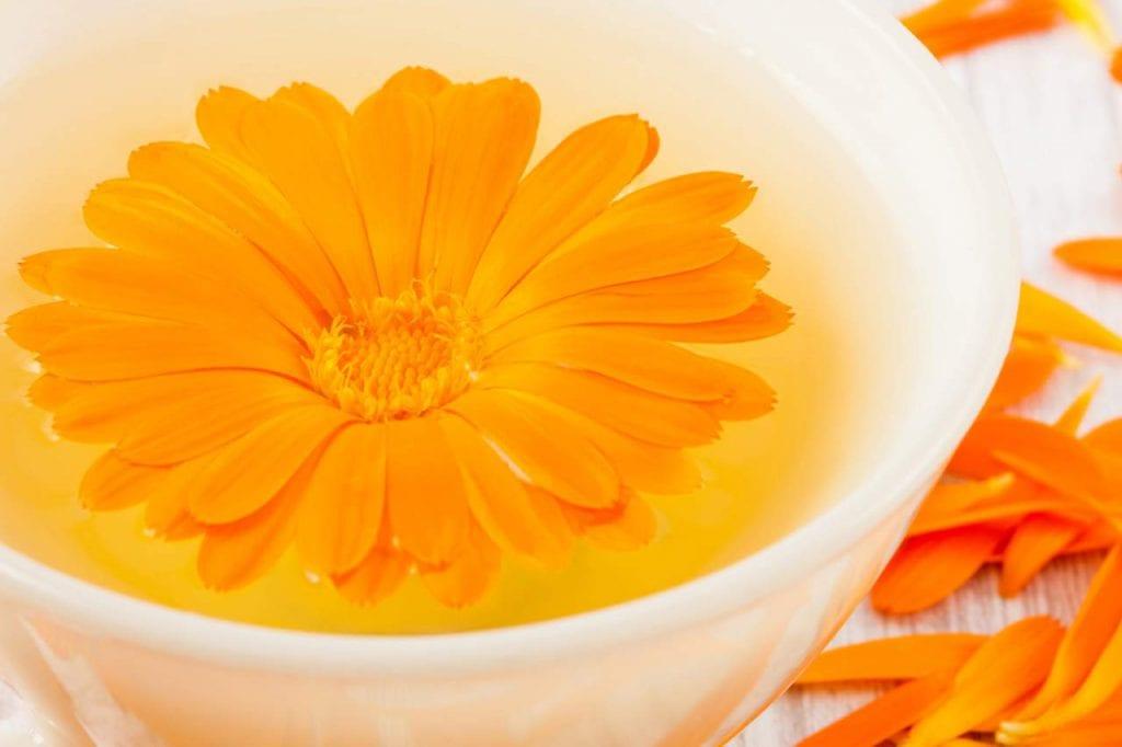 Napar i nalewka z kwiatów nagietka
