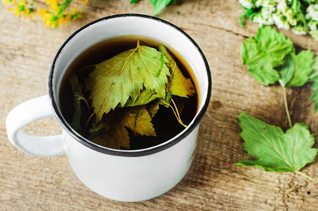Napary i odwary z liści czarnej porzeczki