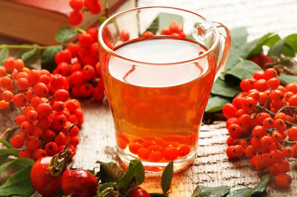 Odwar i napar z owoców jarzębiny