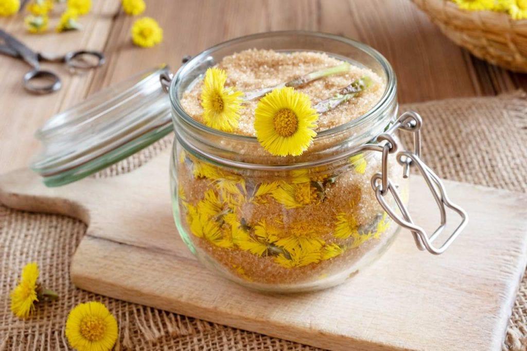 Odwary i napary z kwiatów i liści podbiału