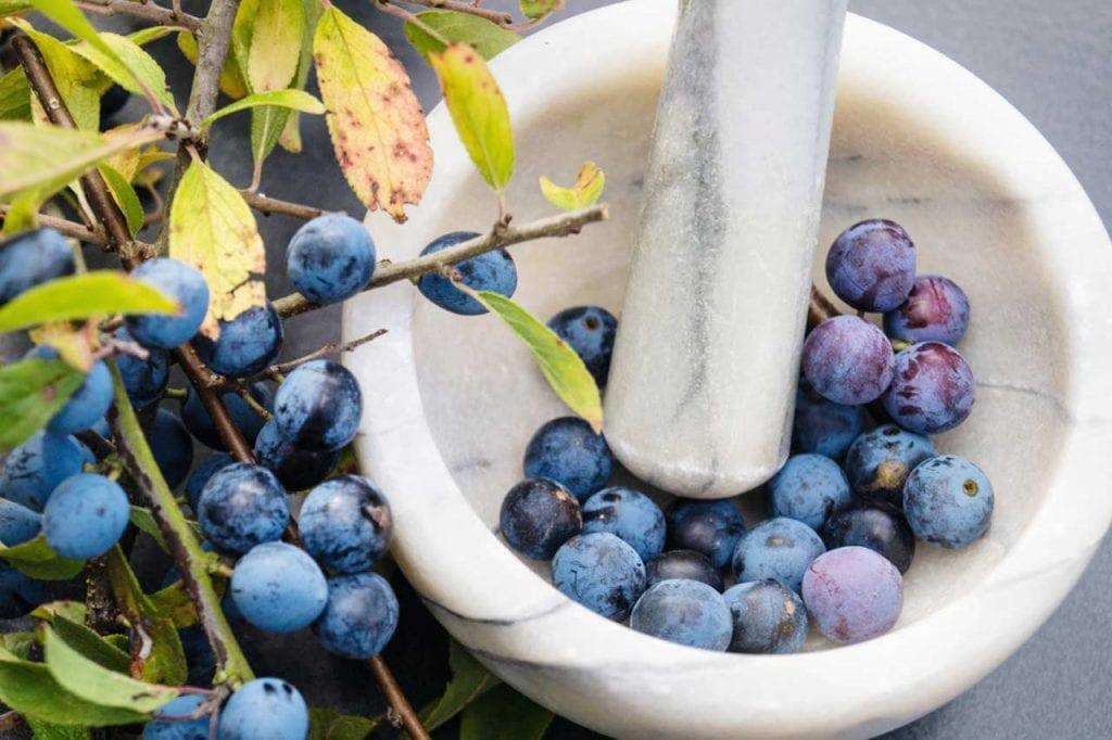 Zastosowanie kwiatów i owoców tarniny w leczeniu chorób
