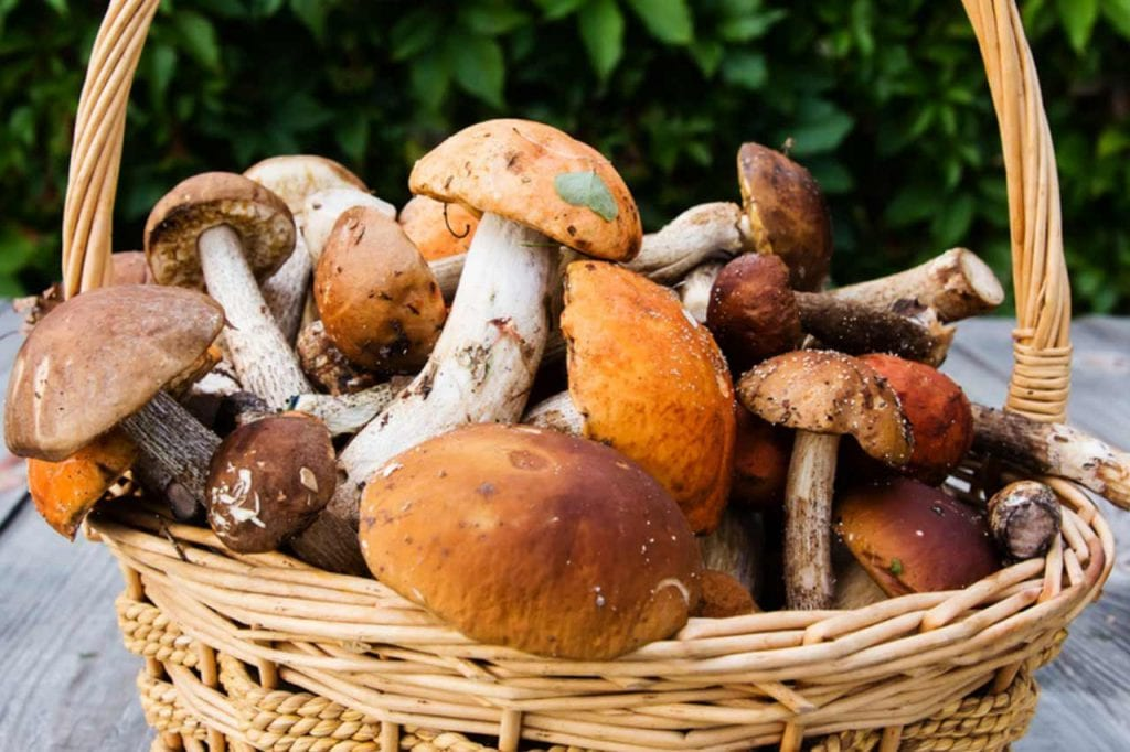 Rodzaje i występowanie najsmaczniejszych grzybów